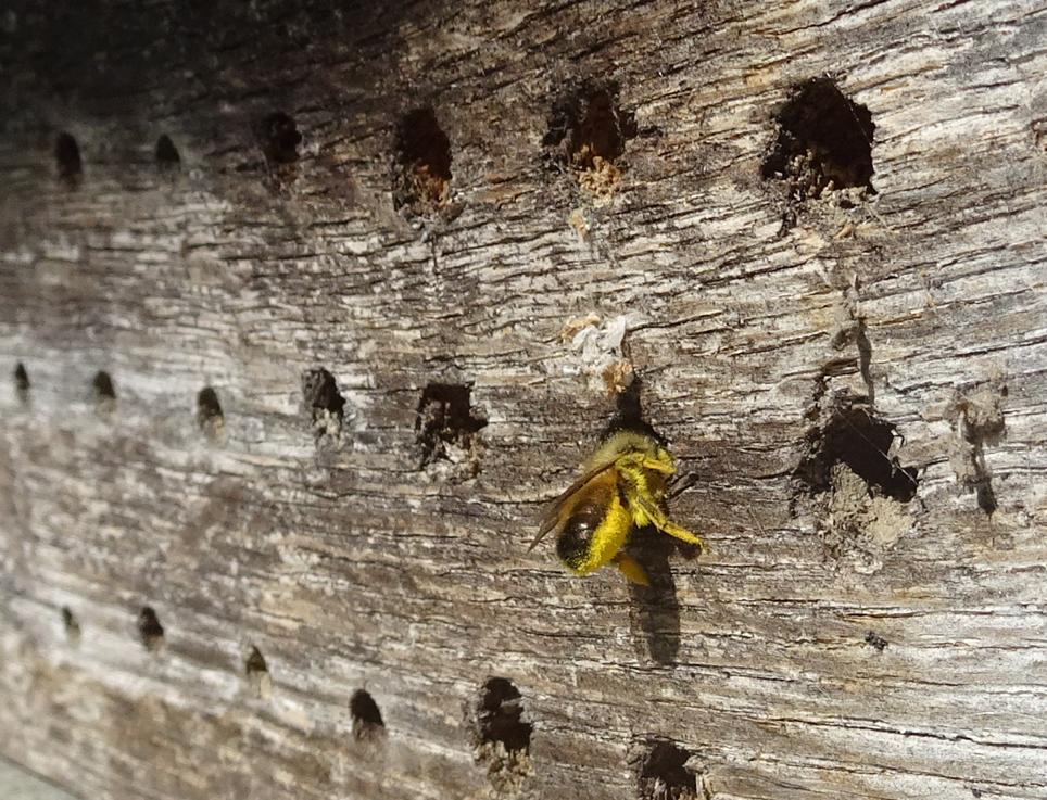 Wildbiene_Einstieg
