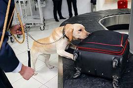 DOGS drug dogs.jpg