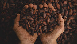 Cacao, cocoa, ecuador, cacao de ecuador