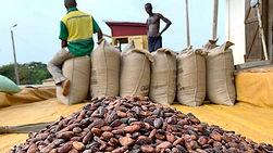 Cacao, cocoa, price