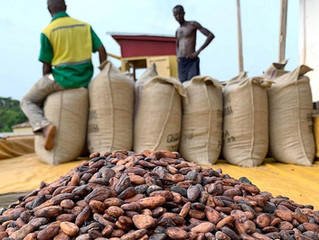 Ghana, Ivory Coast demand fair price, suspend sale of cocoa beans