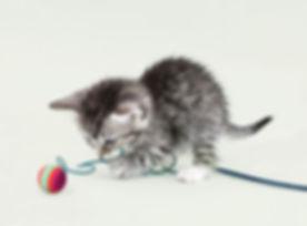 Cute Kitten_edited.jpg