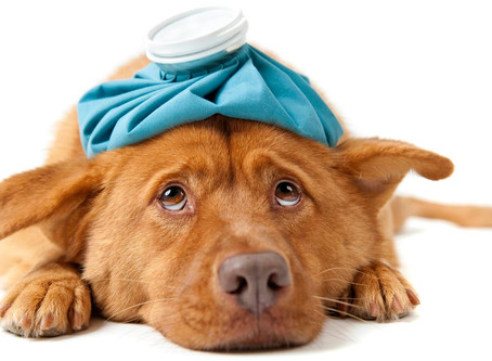 Financial Assistance for Veterinary Costs
