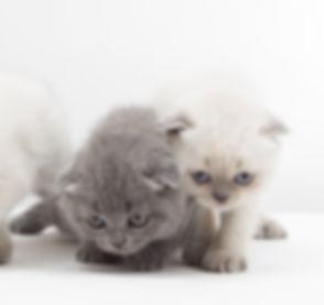 Kittens_edited.jpg