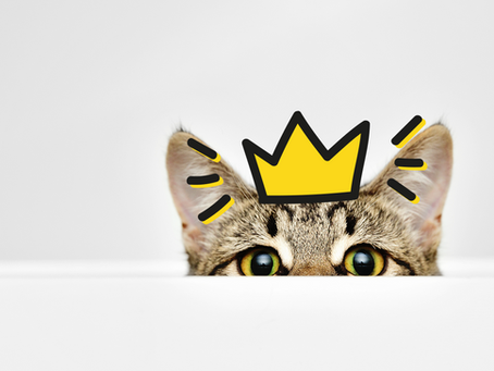 The Answers to Your Cat Potty Problems - Dr. Elsey