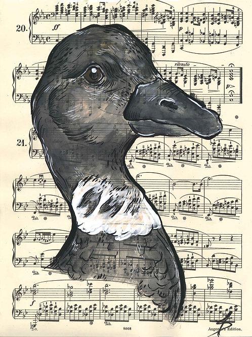 Brant music birds