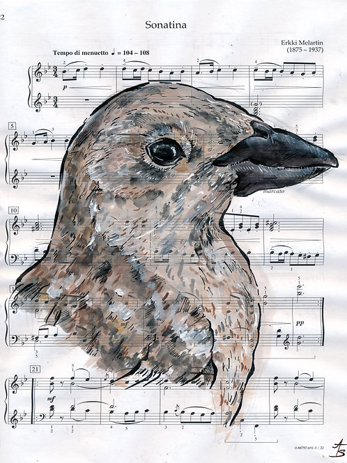 Music Bird Prints:Brown-Headed Cowbird