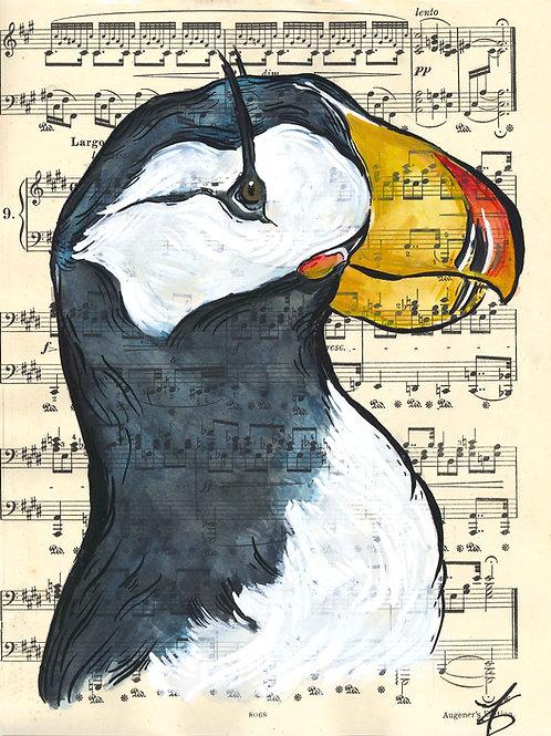 Horned Puffin music birds