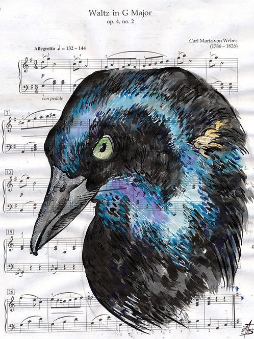 Music Bird Prints:Common Grackle