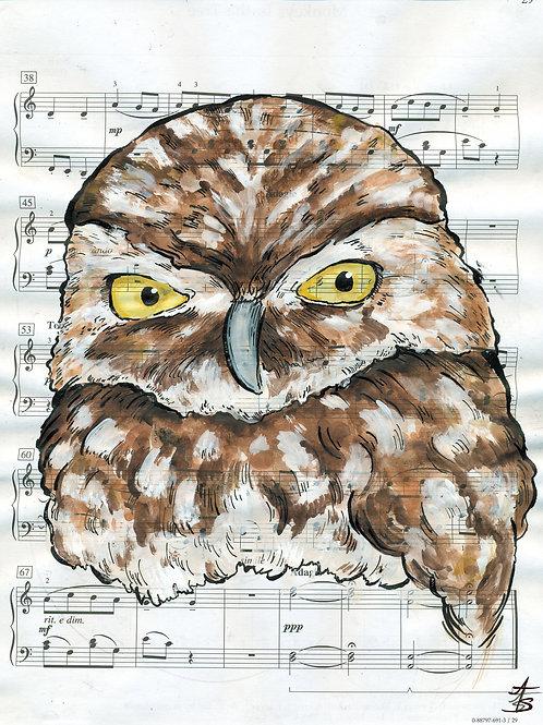 Music Bird Prints:Burrowing Owl