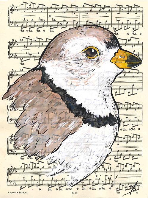 Semi-Palmated Plover music birds