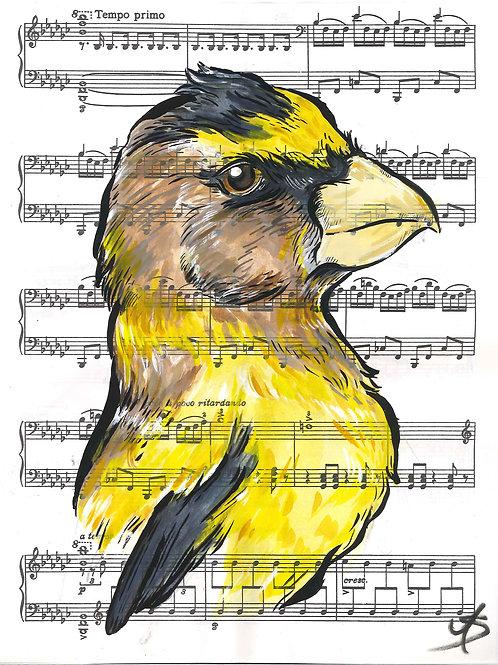 Music Bird Prints: Evening Grosbeak