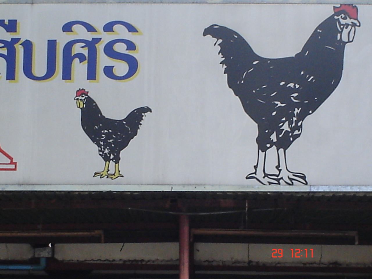Graphic Chicken