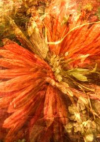 Herbstastern.jpg