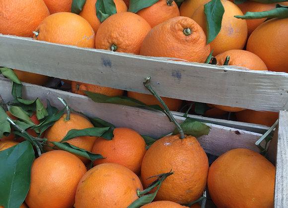Orangenkiste saisonal 10 kg
