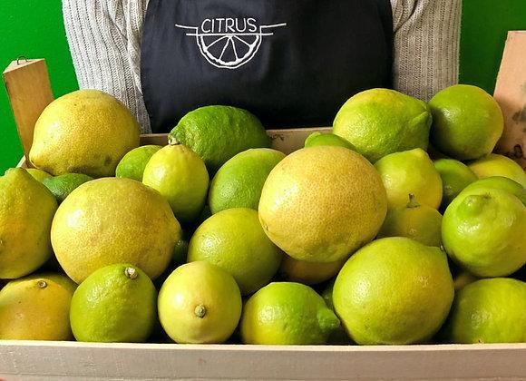 Zitronen Zagara Bianca BOX 8kg