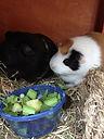 Small Pet Care Warrington