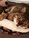 Cat Sitting Warrington