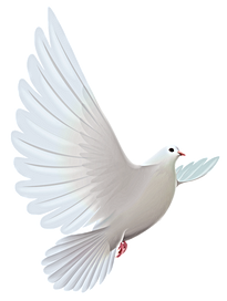 dove-for-program2.png