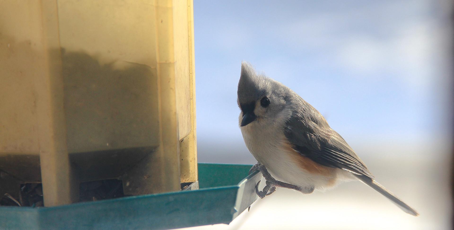 bird-933025.jpg