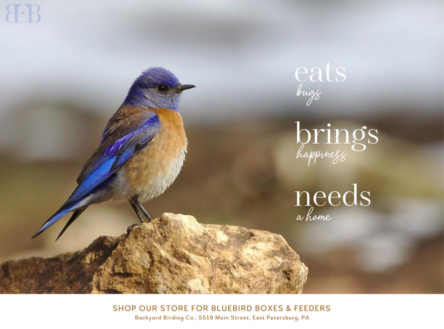 WebPage.Spring2020_bluebird.jpg