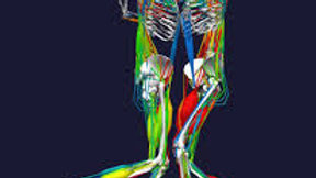 Biomechanics of Bodies: ​BoB