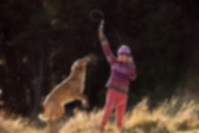 Dunedin dog portraits-9.jpg