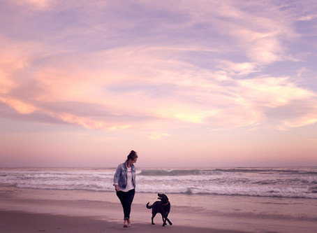 Dunedin beach dog photoshoot