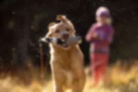 dunedin dog action portrait.jpg