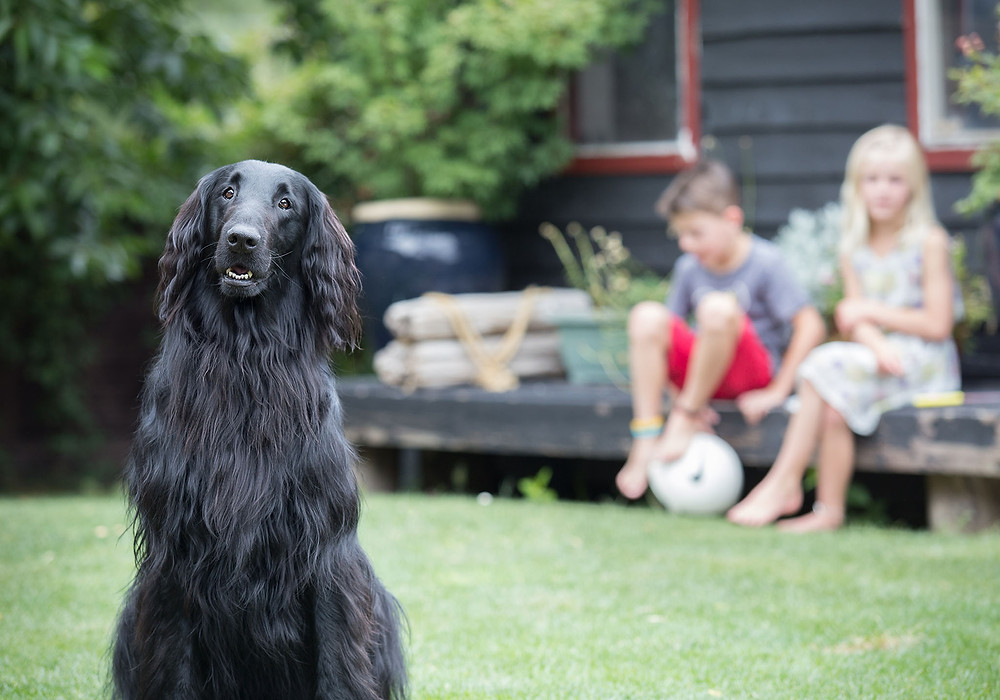 A quick groom before will make for great family pictures with a dog