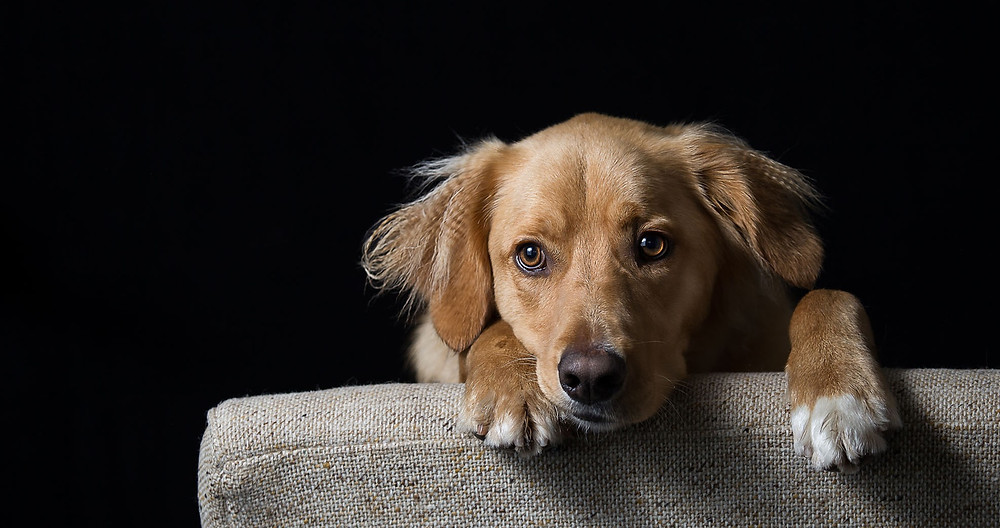 Cute picture of a dog peeping over a chair