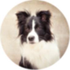 Dog portrait Dunedin.jpg