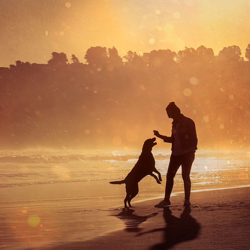 A woman plays with her dog at sunset on the beach during a photoshoot in Dunedin