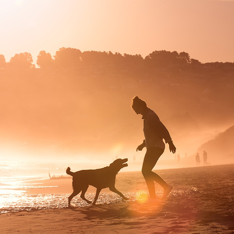 A woman and her dog play on the beach in Dunedin at sunset
