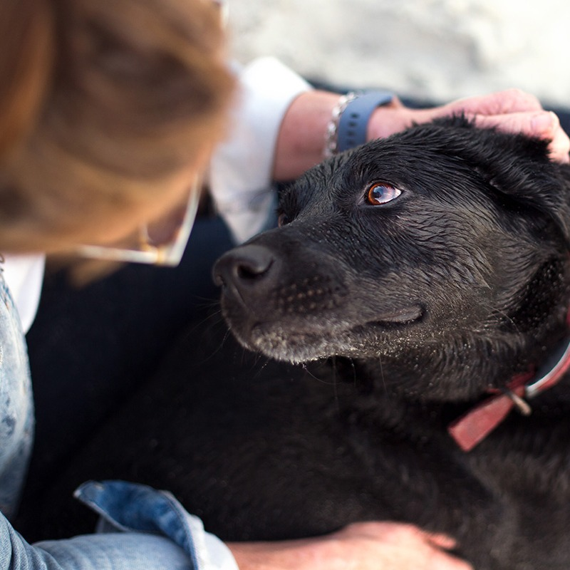 A black dog looks up at her owner