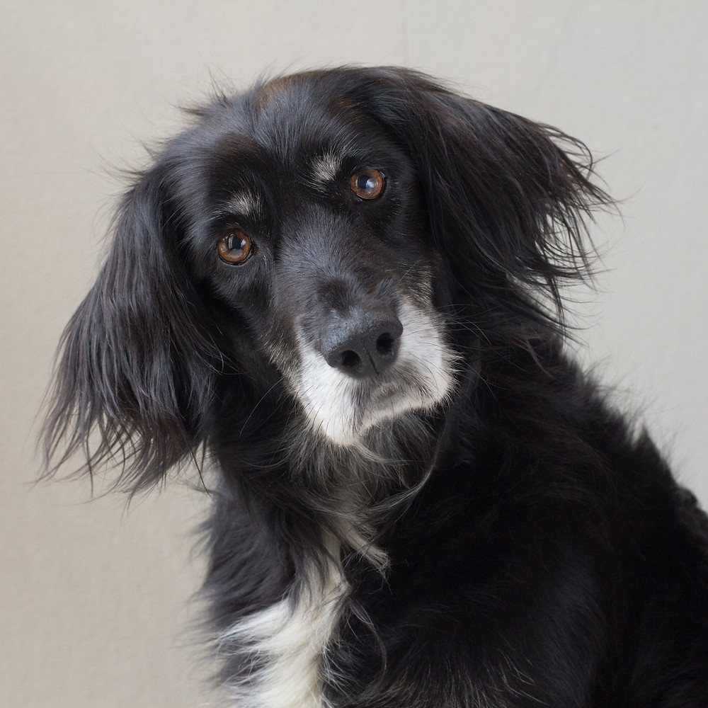 Dog portrait with beautiful expression