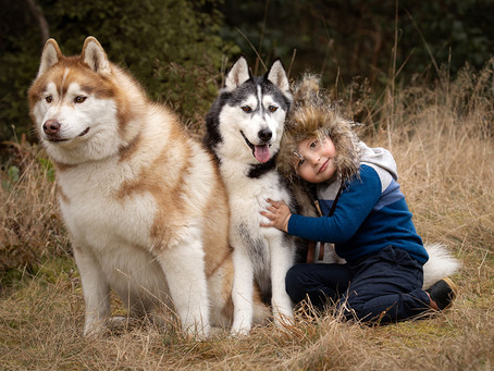 Family photoshoot with dogs