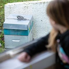 St-Leonards-School-Dunedin-beehive_edited.jpg