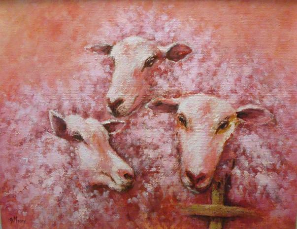 Moutons roses.JPG
