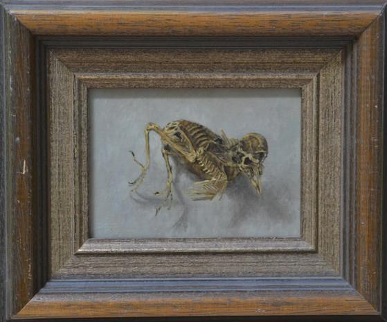 skeletje