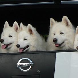 1240114314_5 dogs- 4 15 09 malia.jpg