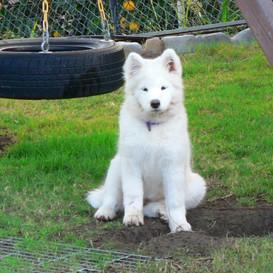 1226466472_14 weeks helping with the yard !.jpg