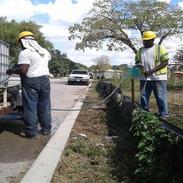 SB Barbara Dr. Project Tree Installation