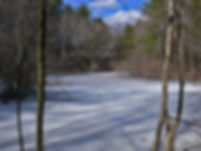 vernal pool - winter
