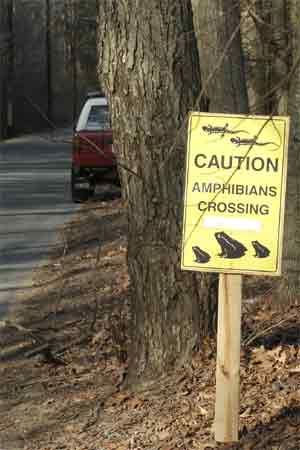 amphibian crossing sign