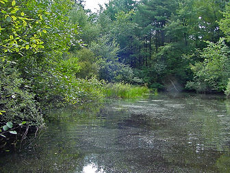 vernal pool - summer