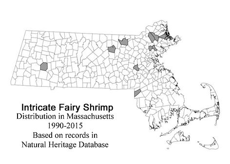 NHESP intricate fairy shrimp range map
