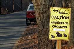 ampbibian crossing sign