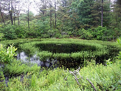 vernal pool with vegetation indicating depth