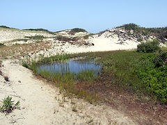 vernal pool in a dune sytem